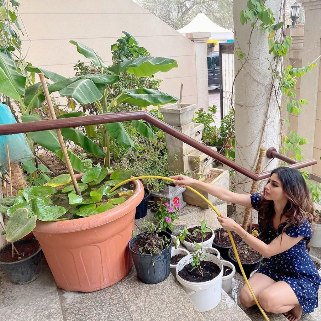 Bollywood Celebrities Seen Farming In Their Garden During The Lock Down