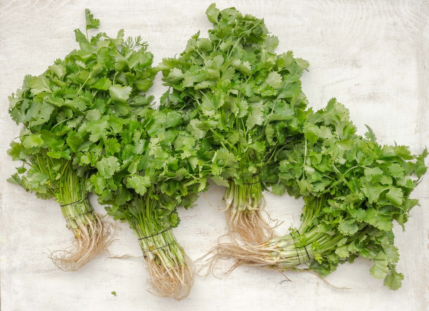 cilantro for weight loss