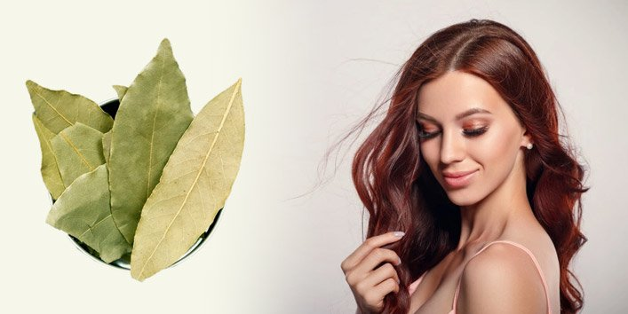 Is Bay Leaf good for Hair Growth and Dandruff Treatment?
