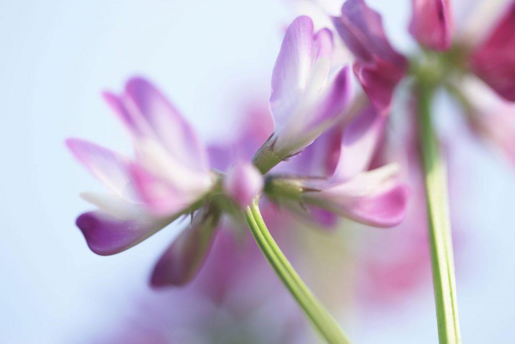 Astragalus Benefits For Skin: Acne, Wrinkles & Fine Lines